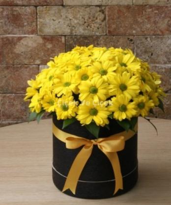Kutuda Sarı Papatya