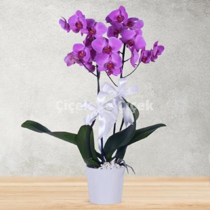 2 Dal Renkli Orkide