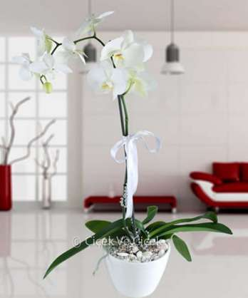 Tek Dal Beyaz Orkide(Seramik Vazoda)